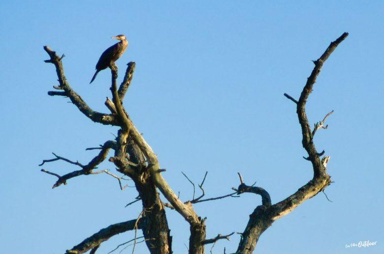 oiseau marais delta leyre
