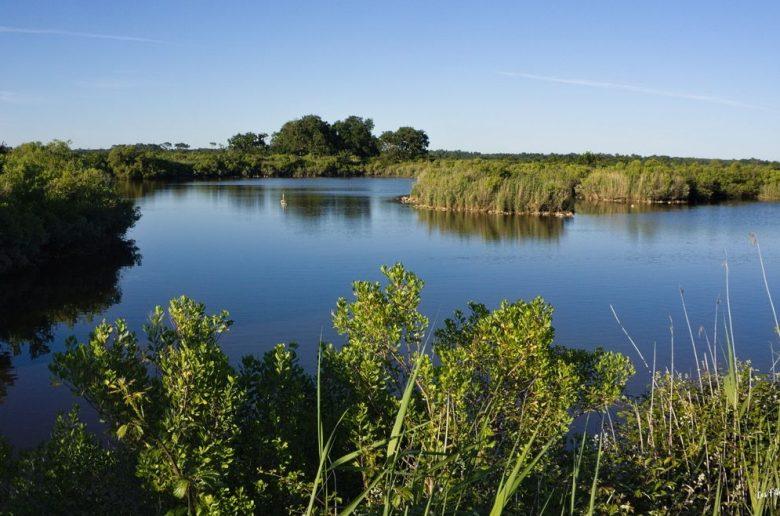 paysage marais delta leyre