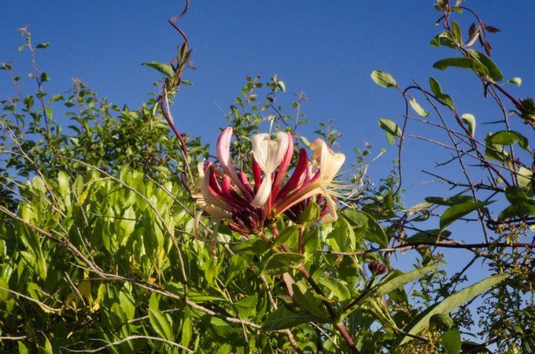 fleur balade marais leyre
