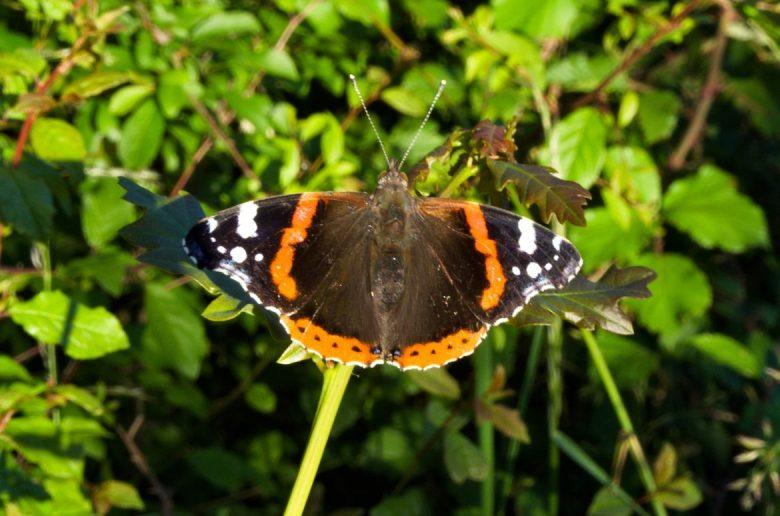 papillon balade delta leyre