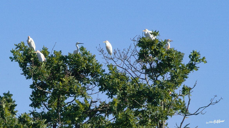 oiseaux marais delta leyre