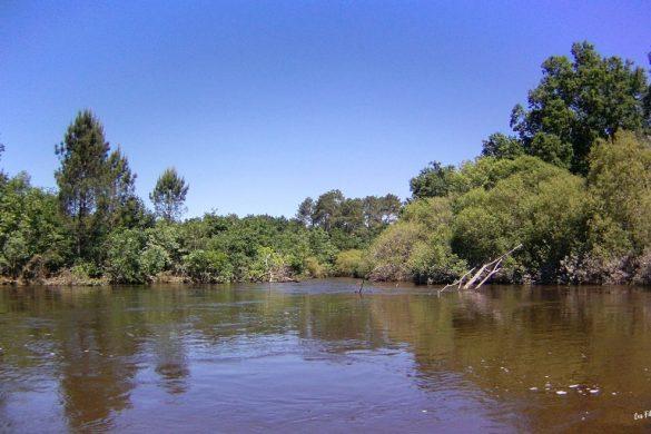 paysage descente de l'eyre en paddle