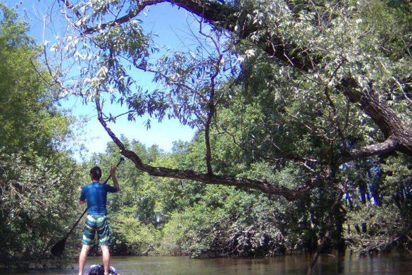 nature descente de l'eyre en paddle