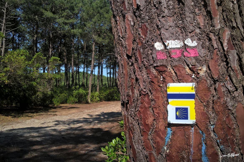 randonnée lac d'hourtin GR8 voie de soulac