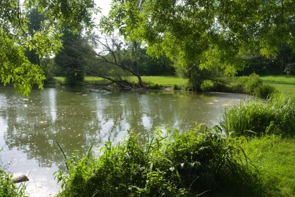 étang latrense