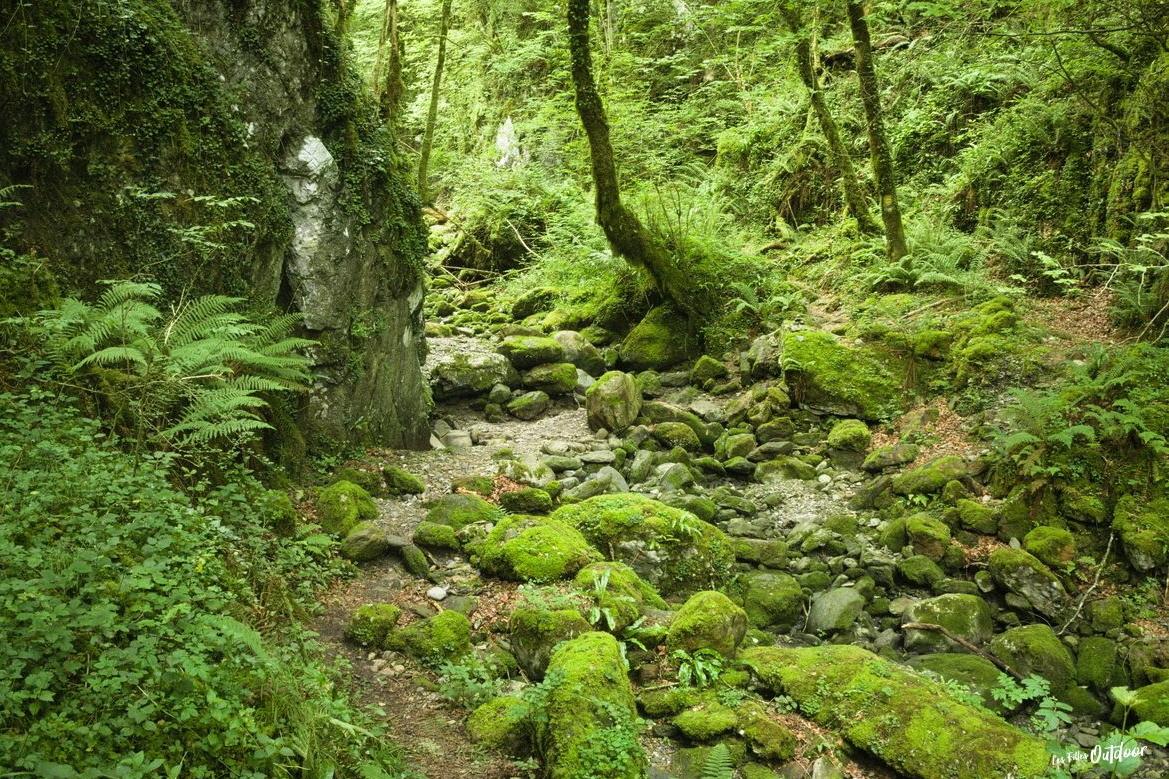 forêt gorges d'ehujarré