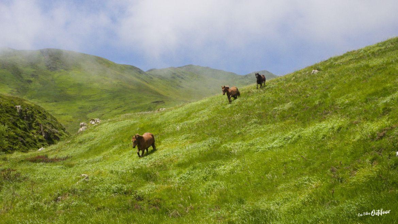 chevaux gorges d'ehujarré