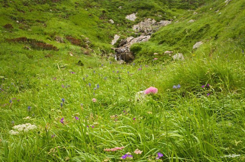 fleurs gorges d'ehujarré