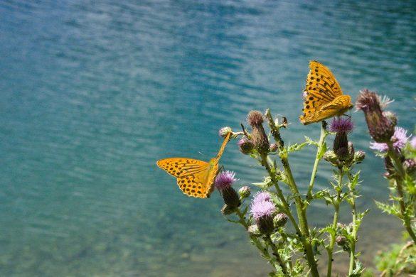 papillons lac de bious artigues