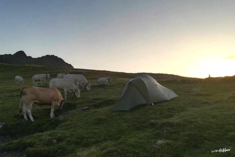 vaches et bivouac lacs d'ayous